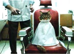 chat_coiffeur.jpg