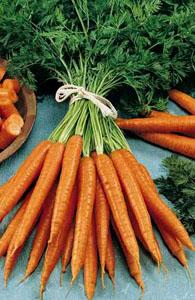 carottes-2.jpg