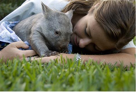 bebe-wombat